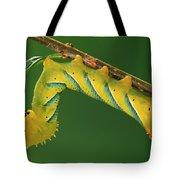 Deaths Head Hawk Moth  Tote Bag