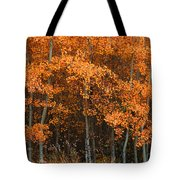 Deciduous Aspen Forest In Fall Tote Bag
