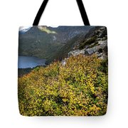 Deciduous Beech Or Fagus In Colour Tote Bag