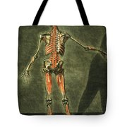 Deep Muscular System Of The Back Tote Bag