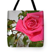Deep Pink Rose - Summer - Rosebuds Tote Bag