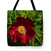 Deep Red Peony With Bright Yellow Stamens  Tote Bag