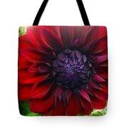 Deep Red To Purple Dahlia Flower Tote Bag