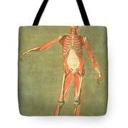 Deeper Muscular System Of The Front Tote Bag