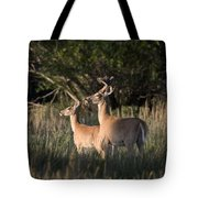 Deer By Belfry Montana Tote Bag by Roger Snyder