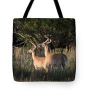 Deer By Belfry Montana Tote Bag