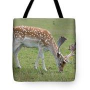 Deer Eating Tote Bag