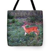 Deer-img-0113-001 Tote Bag