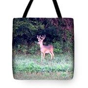Deer-img-0122-7 Tote Bag