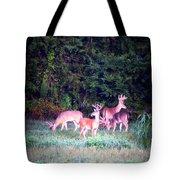 Deer-img-0158-003 Tote Bag