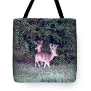 Deer-img-0177-001 Tote Bag