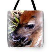 Deer-img-0349-002 Tote Bag