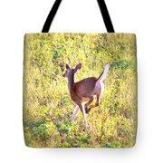 Deer-img-0456-001 Tote Bag
