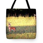 Deer-img-0627-001 Tote Bag