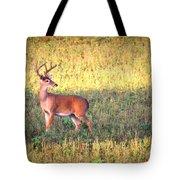 Deer-img-0627-002 Tote Bag