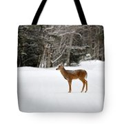 Deer In Road Tote Bag