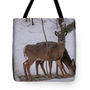 Deer In The Trees Tote Bag