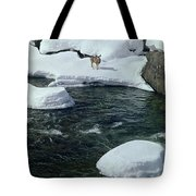 104618-v-deer On The Snow Bank Tote Bag