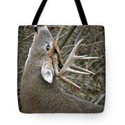 Deer Pictures 444 Tote Bag