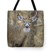 Deer Pictures 445 Tote Bag