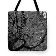 Denver Tree Fx Tote Bag