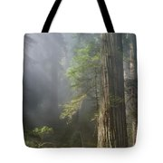 Depth Of Forest Tote Bag
