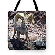 Desert Bighorn Sheep Tote Bag