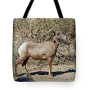 Desert Bighorn Sheep Ewe With Radio Tote Bag