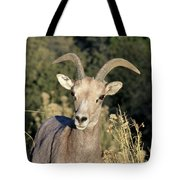 Desert Bighorn Sheep Zion National Park Tote Bag