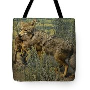 Desert Coyote Tote Bag