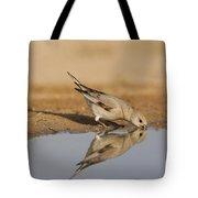 Desert Finch Carduelis Obsoleta Tote Bag