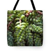 Desert Succulents 2 Tote Bag