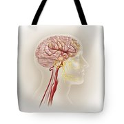 Detail Of Ateries Of The Human Head Tote Bag