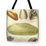 Devonian Fossils, Illustration Tote Bag