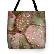 Dew Drops On The Rose Leaves Tote Bag