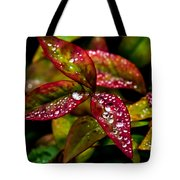 Dew On Autumn Leaves Tote Bag