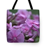Dew On Phlox Tote Bag