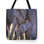 Dhikala Elephants Tote Bag