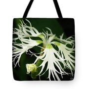 Dianthus Superbus - White Tote Bag