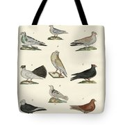 Different Kinds Of Pigeons Tote Bag