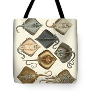Different Kinds Of Rays Tote Bag