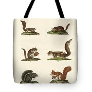 Different Kinds Of Squirrels Tote Bag