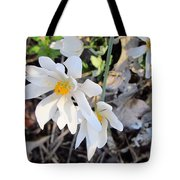 Discovery In The Woods Tote Bag