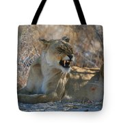 Disgruntled Lioness Tote Bag