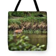 Doe Crossing The River Tote Bag
