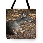 Doe Lying Down Tote Bag