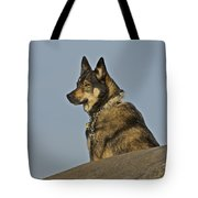 Dog At Point Bonita 2 Tote Bag