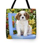 Dog On Blue Chair Tote Bag by Greg Cuddiford