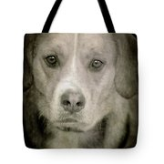 Dog Posing Tote Bag