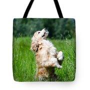 Dog Sitting Up Tote Bag